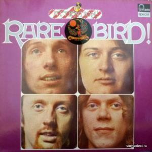 Rare Bird - Attention! Rare Bird!